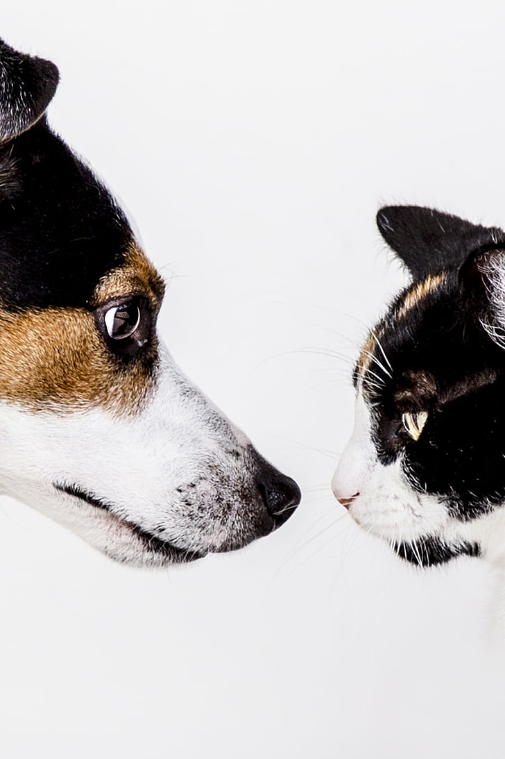 猫, 犬, 動物, 犬, 動物, ペット, 自然