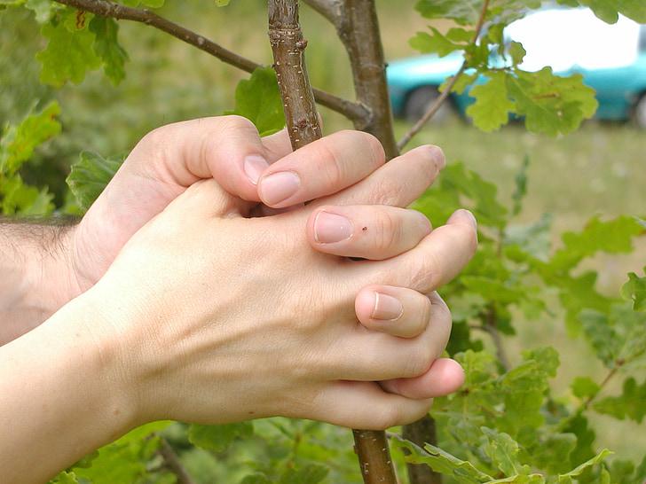 handen, boom, vinger