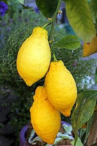 citrons, citron vert, agrumes, jaune, sure, fruité, alimentaire