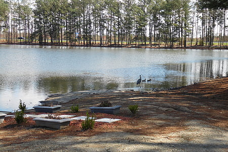 pond, lake, water, nature, landscape, summer, outdoor