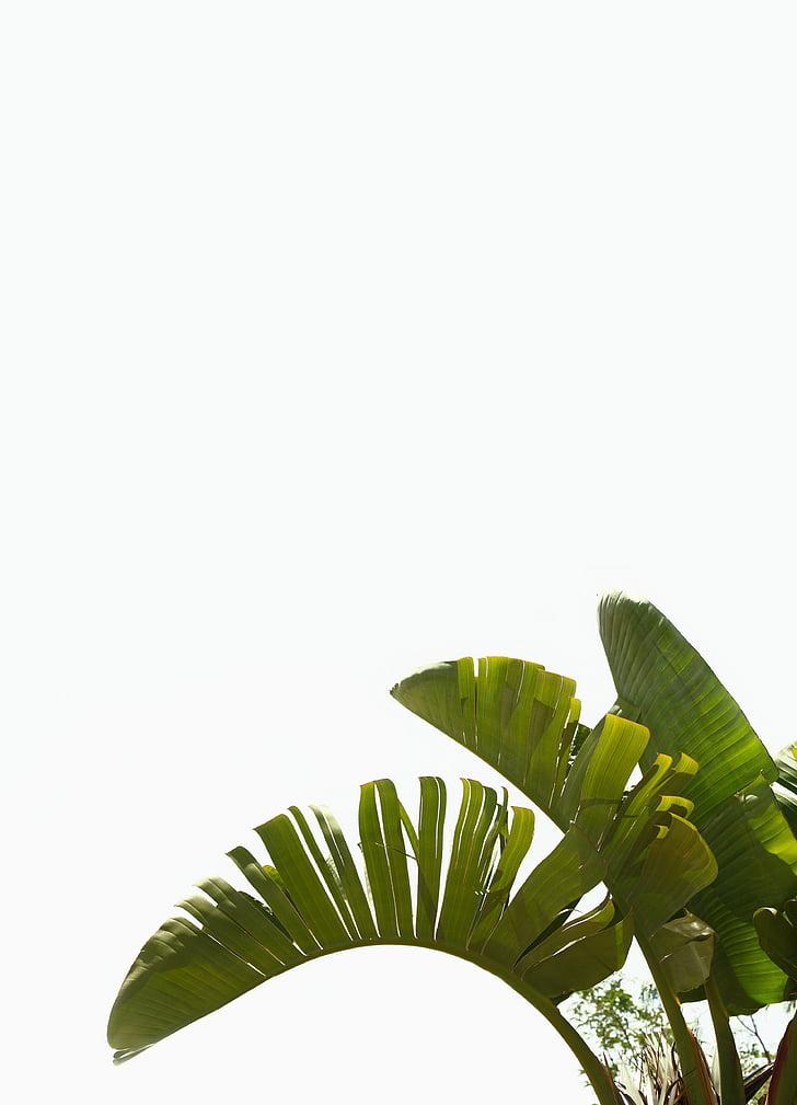 green, plant, leaf, plants, nature, leaves, trees
