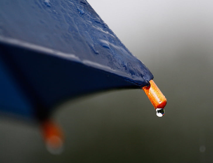 pluja, paraigua, degoteig, mullat, temps, pantalla, tardor
