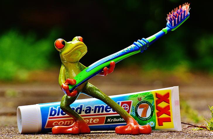치약, 개구리, 칫 솔, 양치질, 위생, 청소, 치아