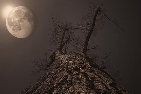 Lluna, arbre, llum de lluna, Lluna plena, Moonrise, crepuscle, nit
