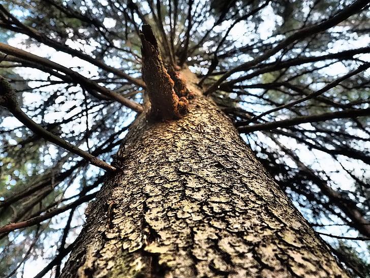 træ, ramme, seks, Fir ramme