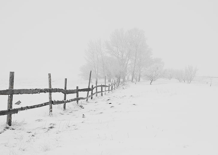 зимни, природата, сезон, дървета, небе, сняг, бяло