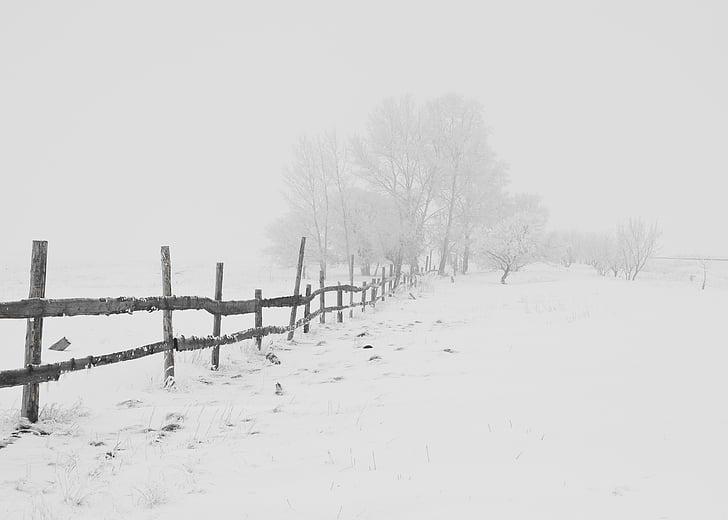 l'hivern, natura, temporada, arbres, cel, neu, blanc