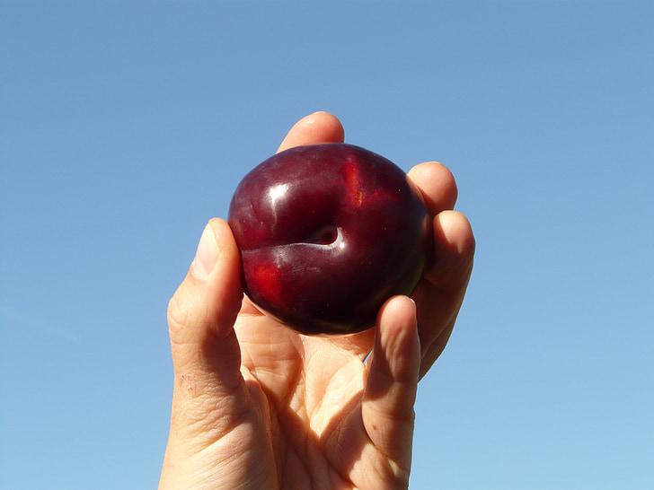 pruim, fruit, voedsel, eten, hand, vinger, houden