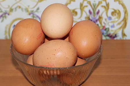 ou, ous de gallina, Nutrició, aliments, eggshell, ou animal, ous