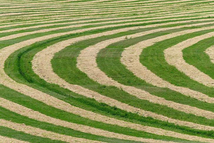 žetev, trava, polje, Kmetija, narave, kmetijstvo, rastlin