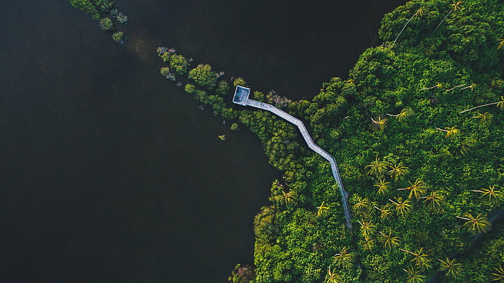 aerial, map, jungle, view, bridge, path, green