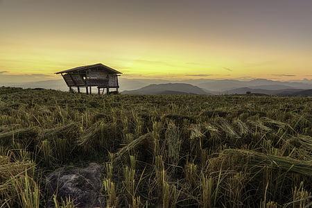 garden, rice, countryside, sunset, asia, pretty, chiang mai thailand