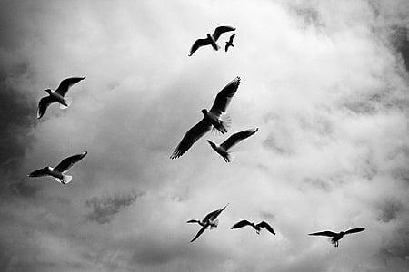 девет, птици, плаващи, небе, Криле, стадо, животни