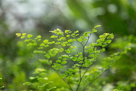Zelená, listy, rastliny, Záhrada, jeseň, jeseň, Príroda