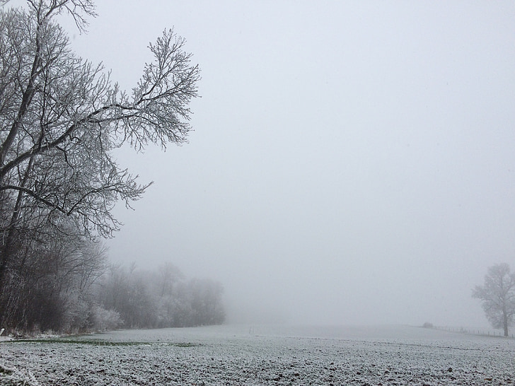 snow, winter landscape, trees frosted