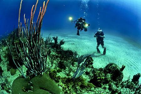 dva, osoba, ronjenje, duboko, plava, Koralji, ronioci