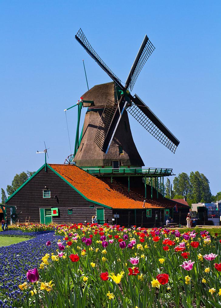 Molí de vent, Països Baixos, jardí, Europa