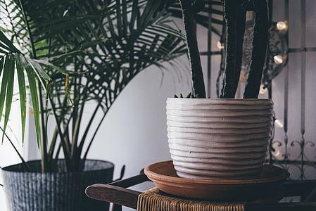 Dekoration, Zimmerpflanzen, Pflanzen, Töpfen, Vase, Blumentopf