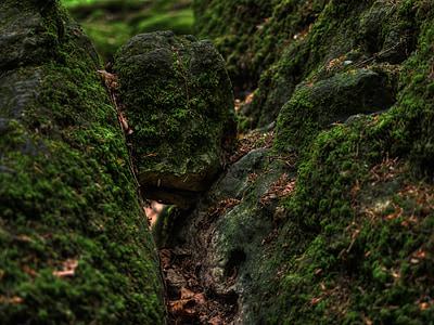 sotabosc, molsa, bosc, verd, bemoost, natura, salvatge