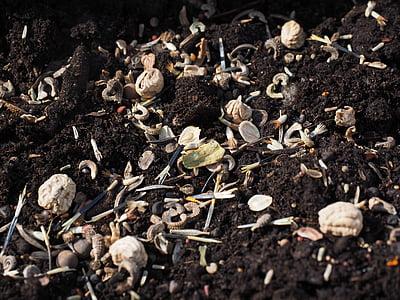 lilleseemned, seemne, külvi, seemned, kasvada, kasvu, loodus