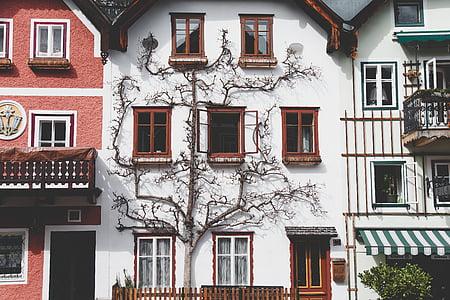arsitektur, rumah, balkon, Apartemen, pohon, cabang, alam
