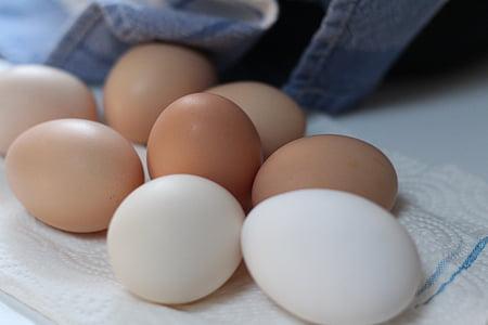 ous, aliments, ous de gallina, ous frescos, ous de color marró, natural, esmorzar