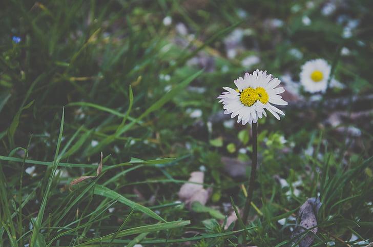 roheline, muru, lilled, loodus, Välibassein, heinamaa, suvel