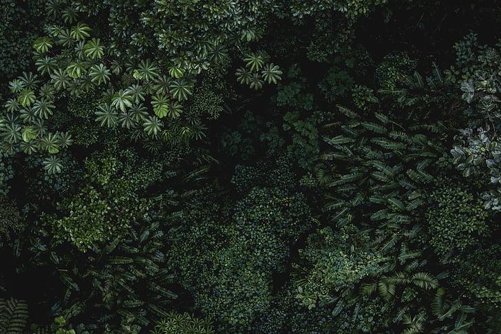 verd, fulla, plantes, natura, l'aire lliure, bosc, arbres