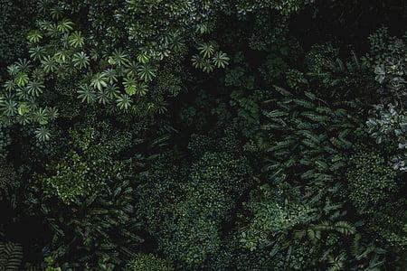Zelená, Leaf, rastliny, Príroda, Vonkajší, Forest, stromy