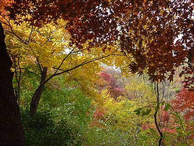 landscape, autumn, autumn leaves, nature