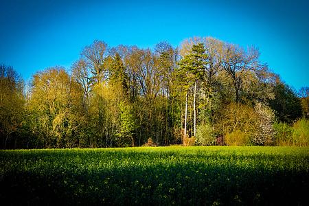 Príroda, Pohľadnica, farby, pole, polia, Fleurs des champs, Príroda