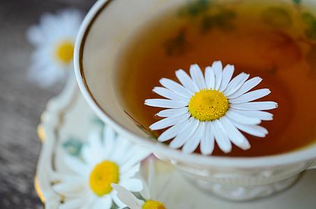 Harmanček, harmančekový čaj, Tee, liek, prírodnej medicíny, rastlín, liečivá rastlina