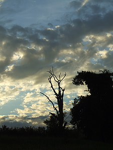abendstimmung, 일몰, 죽은 식물, 트리, 스카이, 구름, 숲
