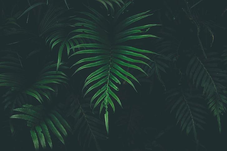 verd, fulla, planta, natura, entelar, fosc, clima tropical