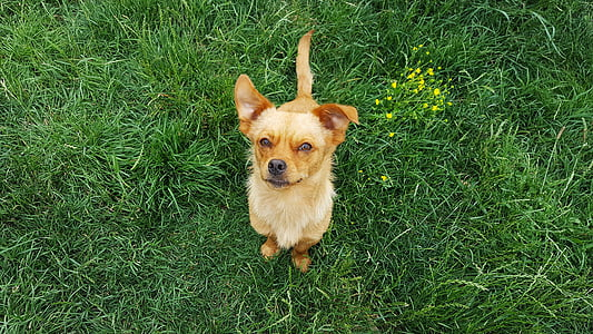 dog, young dog, doggy, puppy, funny dogs, yellow dog, yellow dogs