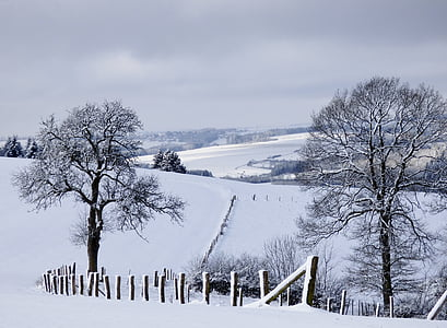 paisaje de invierno, nieve, árboles, invierno, Blanco, naturaleza, paisaje