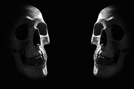 anatomy, background, body, bone, brain, cranium, creepy