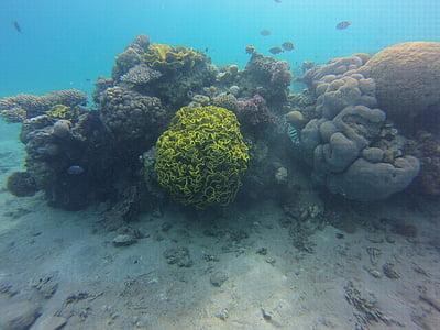 koraljni, ronjenje, plivati, pod vodom, ronioci, životinja, meeresbewohner