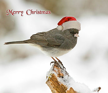 christmas, christmas card, christmas greeting, bird, christmas motif, cap, greeting card