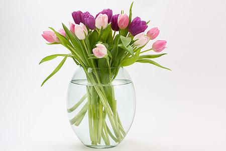 tulipano, Mazzo del tulipano, fiore di primavera, bouquet, schnittblume, fiore, Blossom