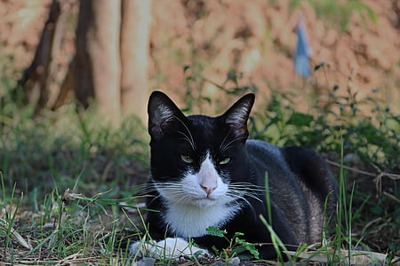 cat, eyes, face, animals, home, cat thailand, cute cat
