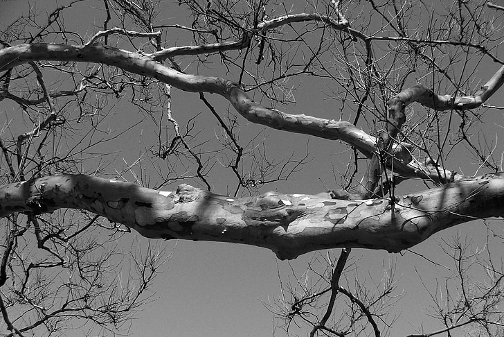 tree, branch, limb, nature, wood, woods, forest