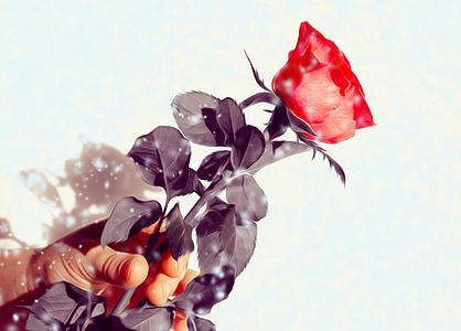 Rosa, flor, regal, vermell, mà, donar, l'amor