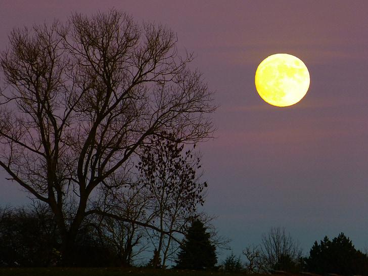 φεγγάρι, Πανσέληνος, Ανατολή Σελήνης, το βράδυ, Λυκόφως, φως του φεγγαριού, δέντρο