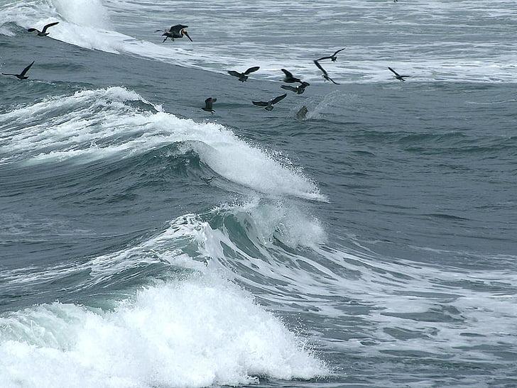 вълна, птици, стадо от птици, спрей, море, океан, вятър