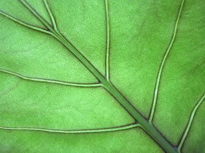 Leaf, pesto, Zelená