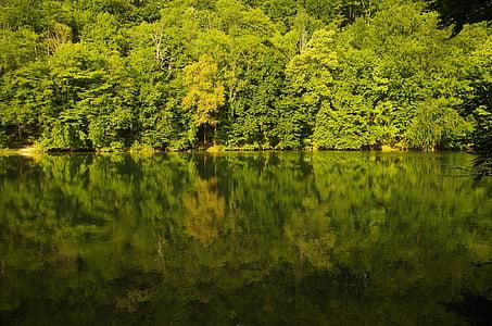 δάσος, Λίμνη, φύση, νερό, κατηγοριοποίηση, προκυμαία, τοπίο