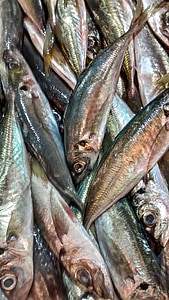 fish, horse mackerel, sea, fish shop, food, seafood, freshness