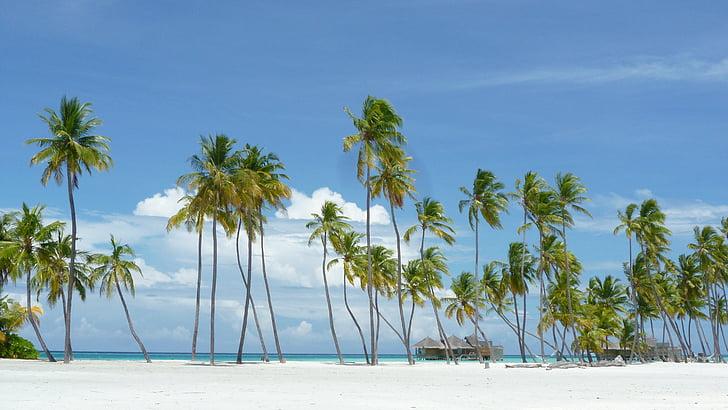 Maldives, illa paradisíaca, platja, vacances, lankanfushi