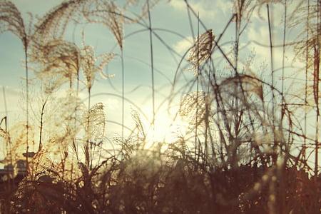 Landschaft, Sonne, Sonnenuntergang, Sonnenstrahl, Feld, Natur, Strahl des Lichtes